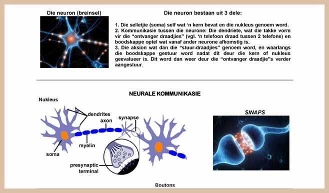 Nerve-Cells-Afrikaans